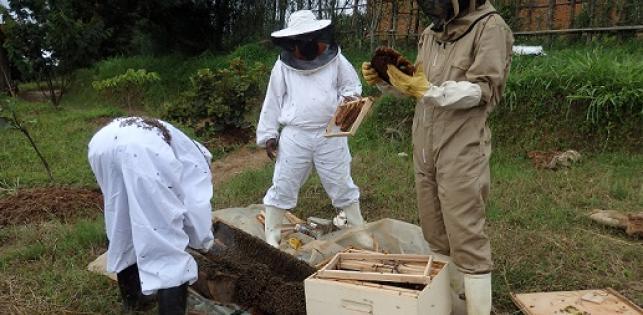 Miel Maya Honing au Rwanda