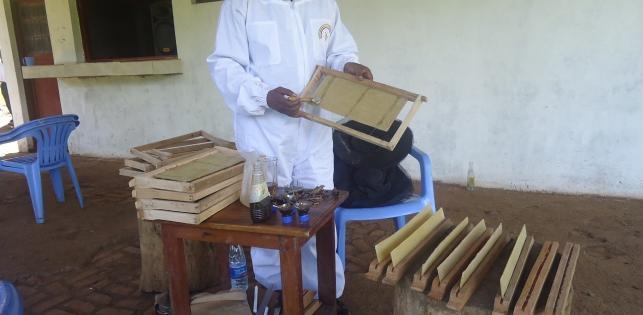 Miel Maya Honing au Kivu (RDC)