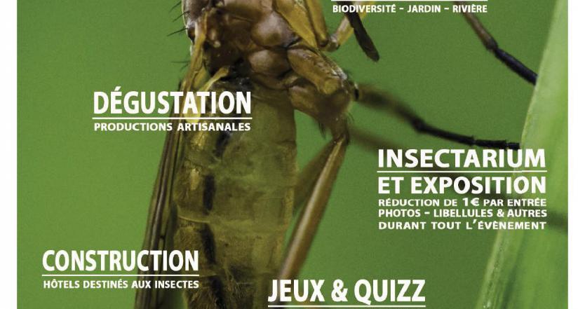 Insectes abeilles hexapoda