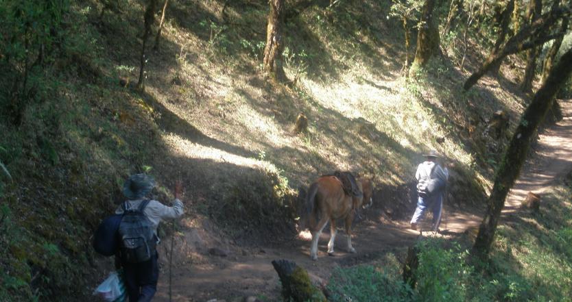 sur_le_chemin_de_tariquia_aart_2011_9290270.jpg